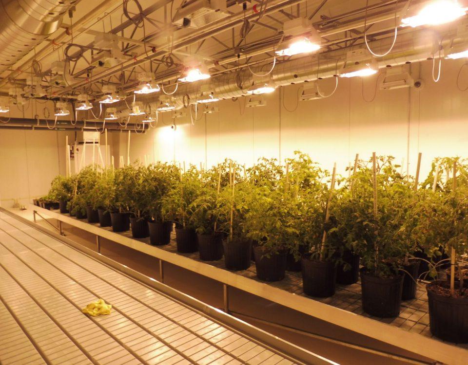 Medical Marijuana Consulting Firms