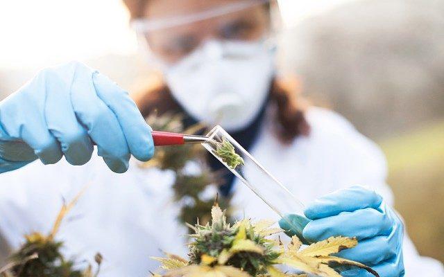 Althea-ASX-AGH-IPO-medicinal-cannabis-640x400